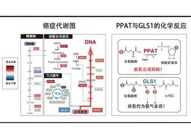 日本研究团队发现难治性癌症治疗新靶标