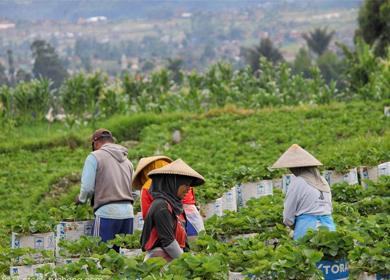 农业在越南疫情形势中扮演支柱角色