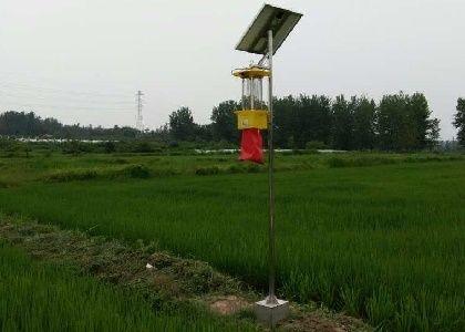 一种太阳能供电杀虫灯