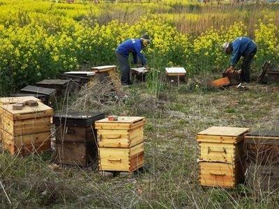 中蜂养殖技术
