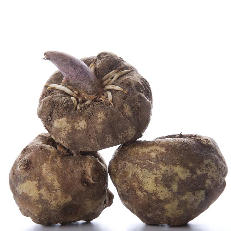 魔芋与黄芪间作的栽培方法
